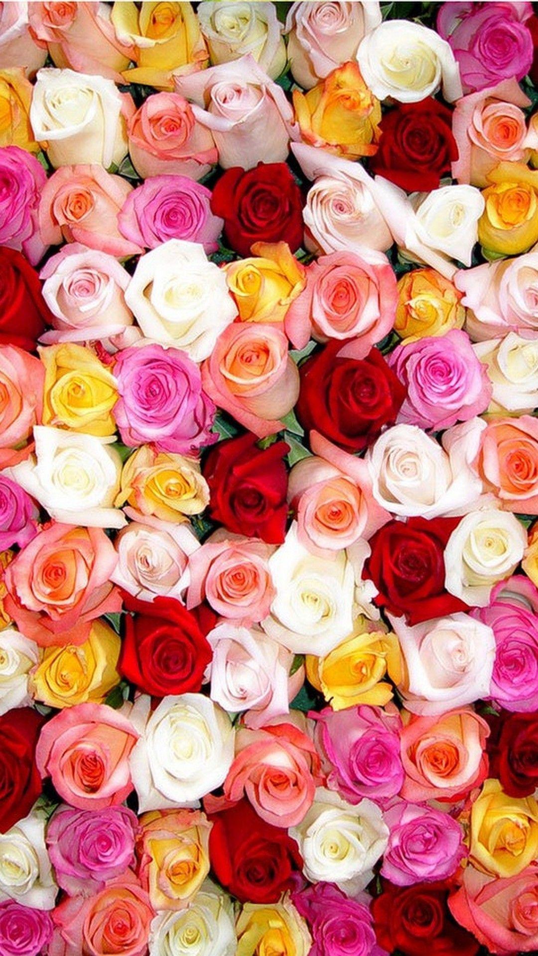 Rose HD Wallpaper iPhone Best HD Wallpapers Flower