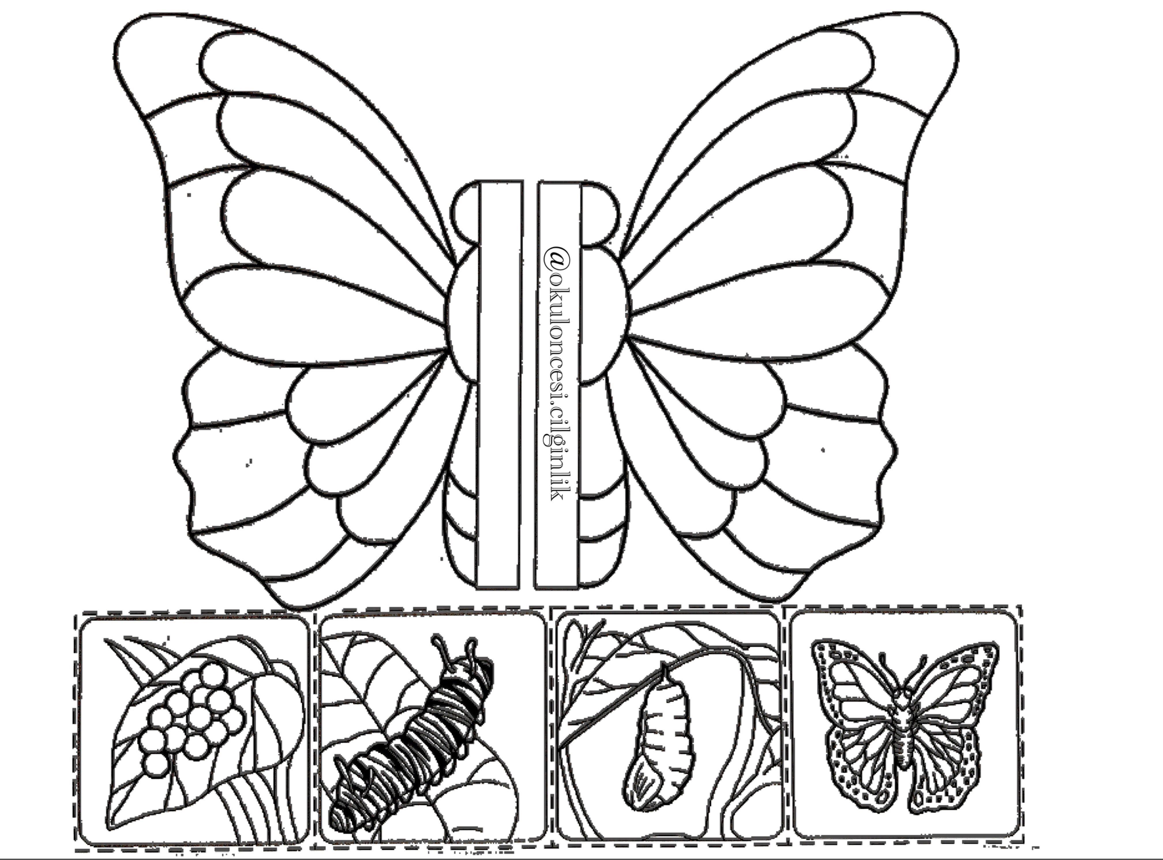 Kelebeğin Oluşum Evreleri Pek De Bir Güzel Oldukelebek Olunca