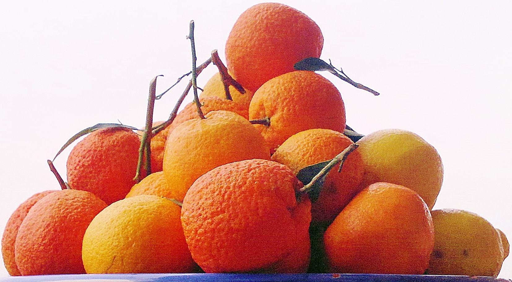 Arance Limoni Mandarini Cedri Clementine Pompelmi Bergamotti