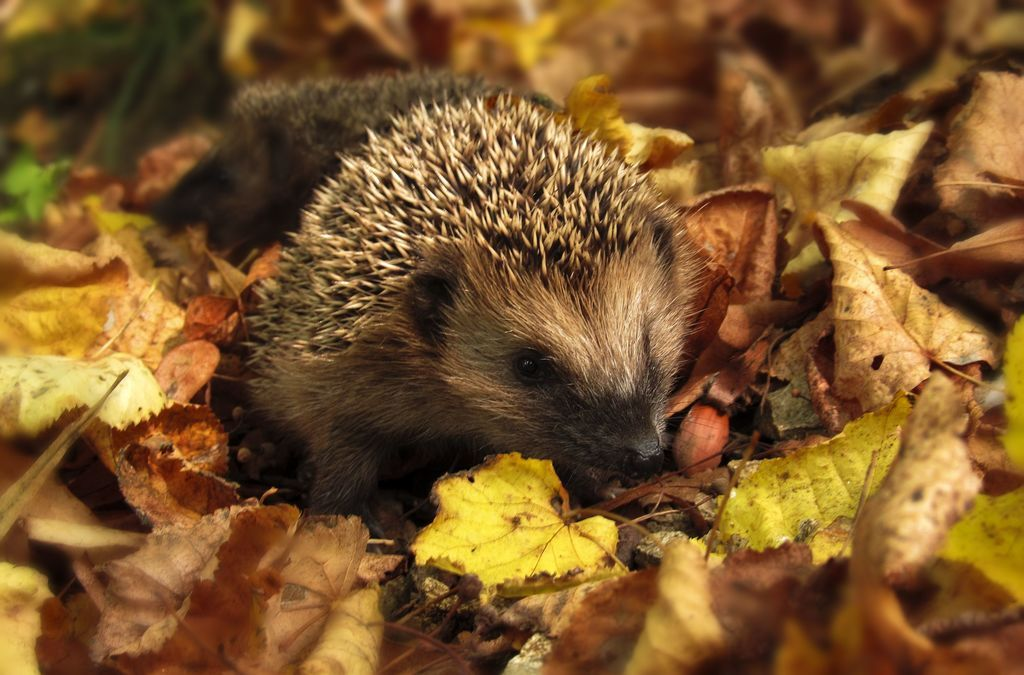 Reasons To Spend Autumn In The Uk Animals Organic Horticulture