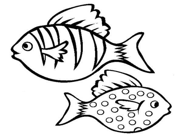 Realistic Aquarium Fish Coloring Page Free Amp Printable