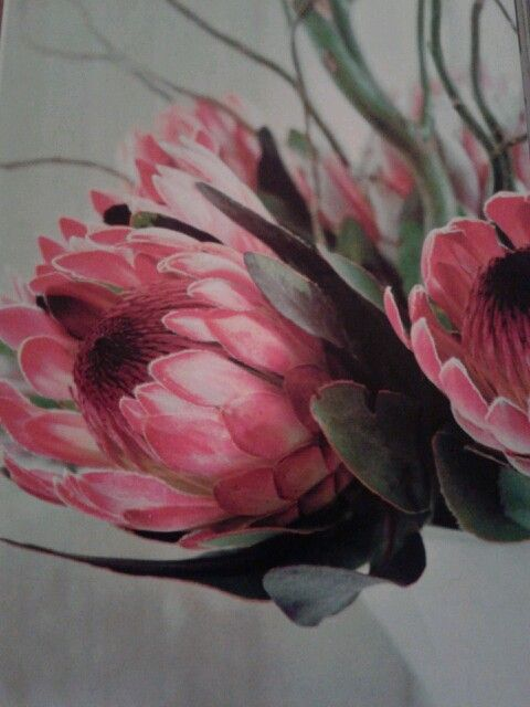 King Proteas 30x30cm Oil On Canvas Sold Going Rate R500 Each Flower Art Flower Painting Protea Art