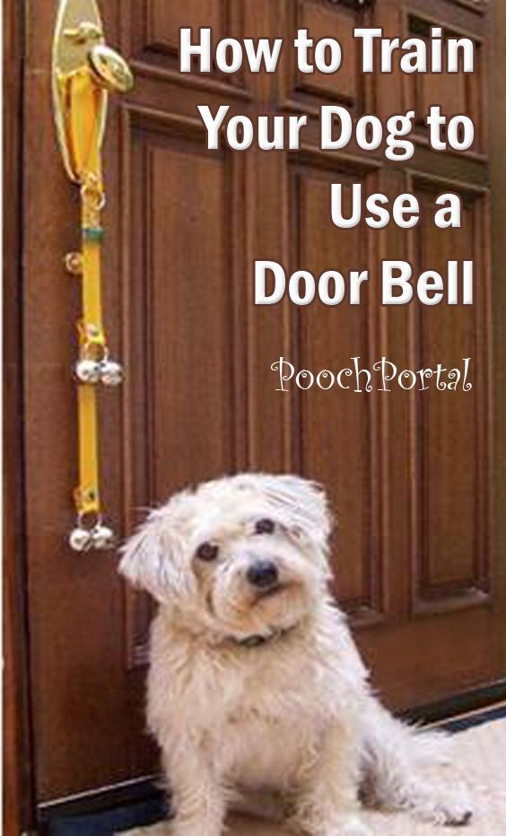 Pin By Nancy Bachus On Info For Pet Parents Training Your Dog
