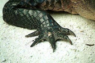 Alligators and Crocodiles 1