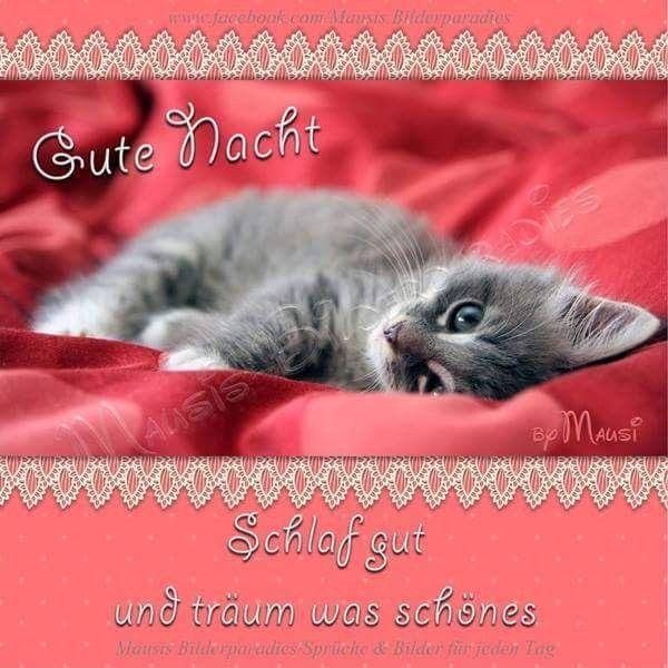 Guten Morgen Sms Für Meinen Schatz кошки Good Night Good