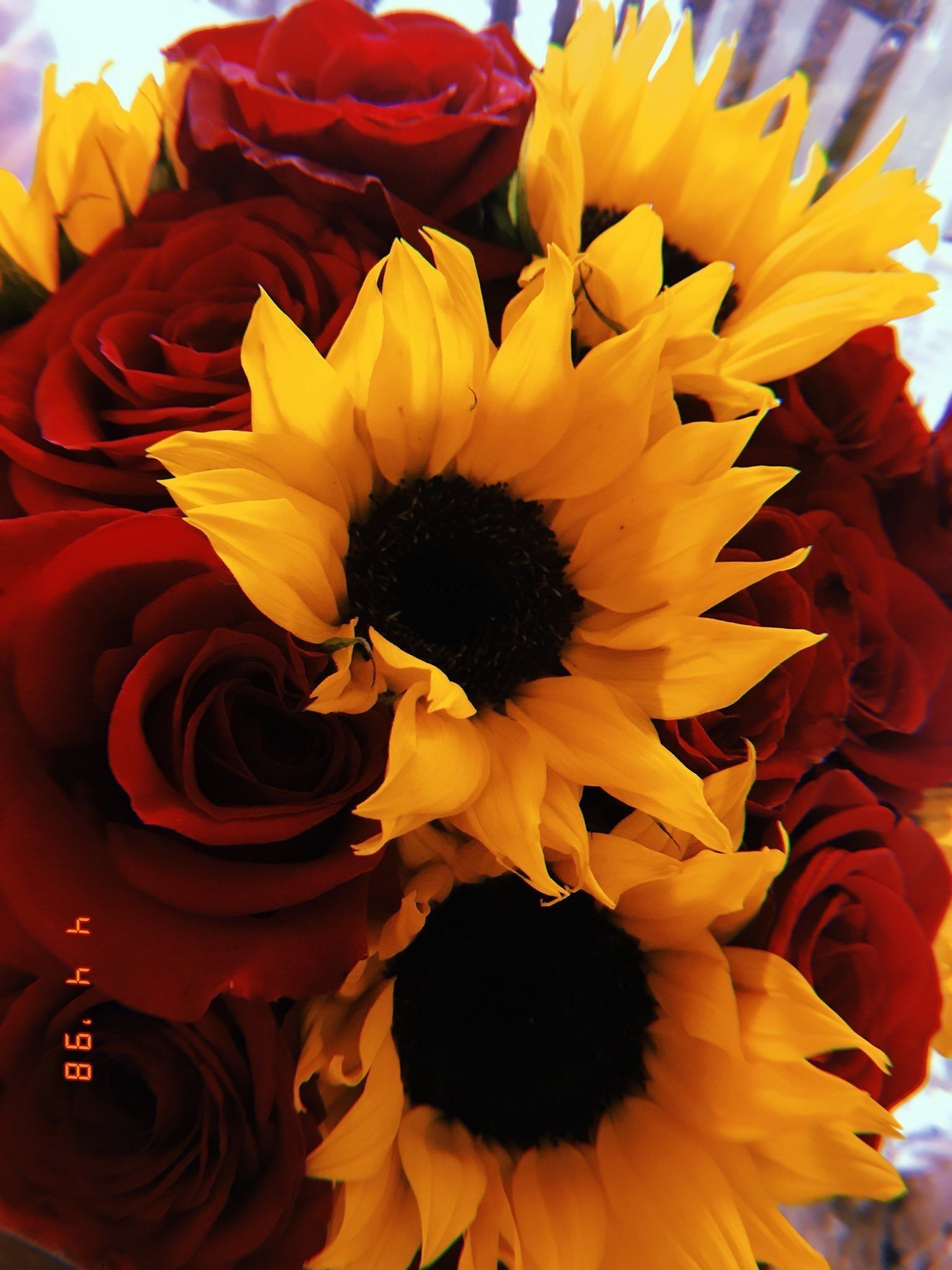 Roses And Sunflowers Background : roses, sunflowers, background, Sunflowers, Roses, 🌹🌻, Roses,, Background,, Beautiful, Flowers