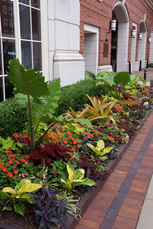the plaza in clayton seasonal display adam woodruff on attractive tropical landscaping ideas id=94906