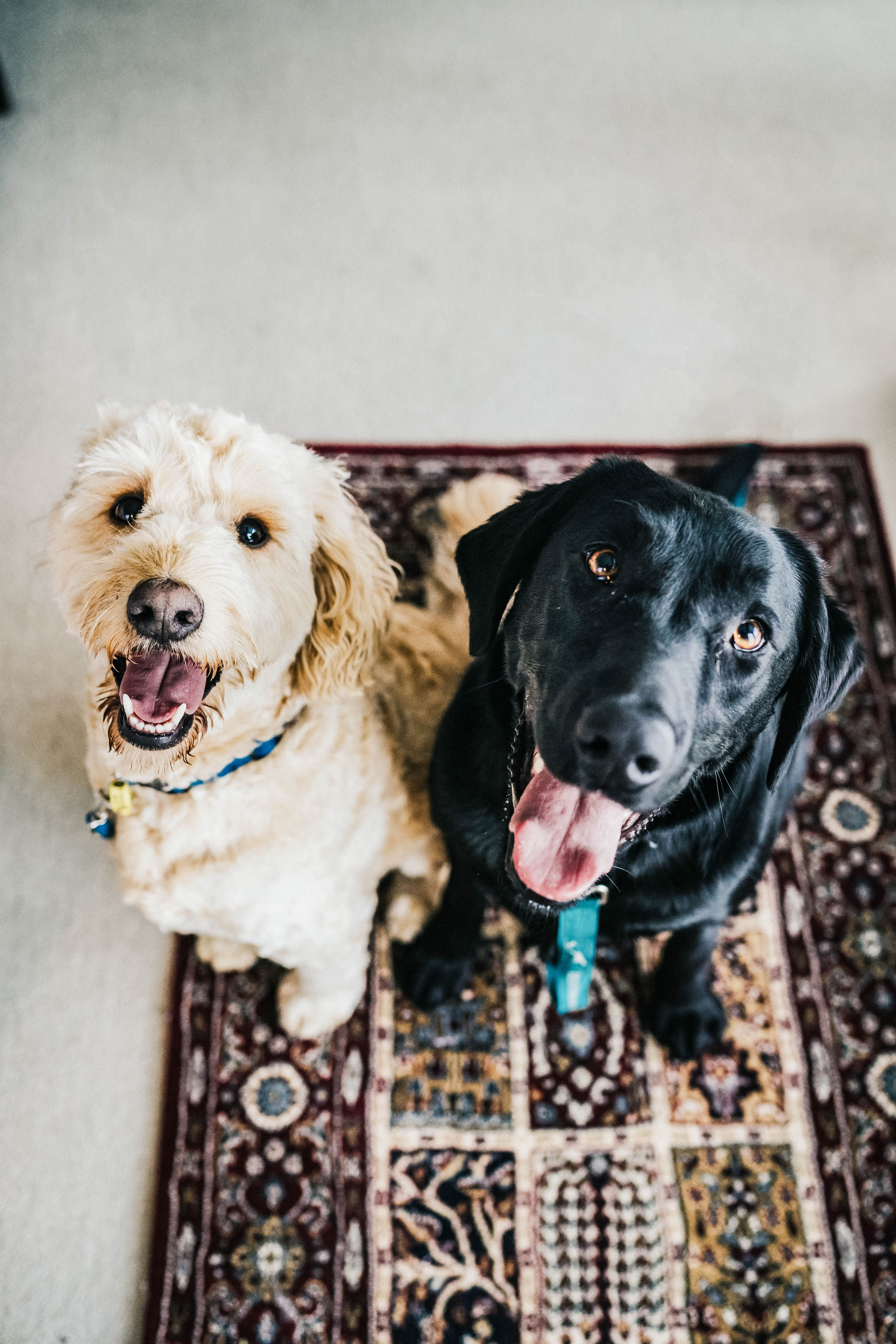 Do You Have Pets At Home In 2020 Dog Sitting Dog Training Obedience Pet Care