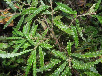 Carol ferns greivance essay