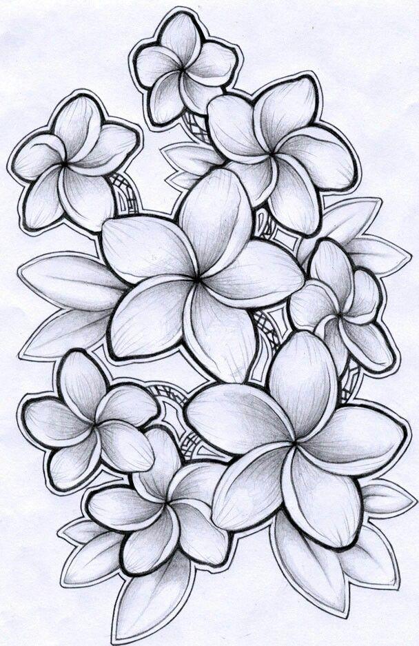 eea6d943e4847 Black and grey plumeria drawing | Tattoo Ideas | Plumeria tattoo ...