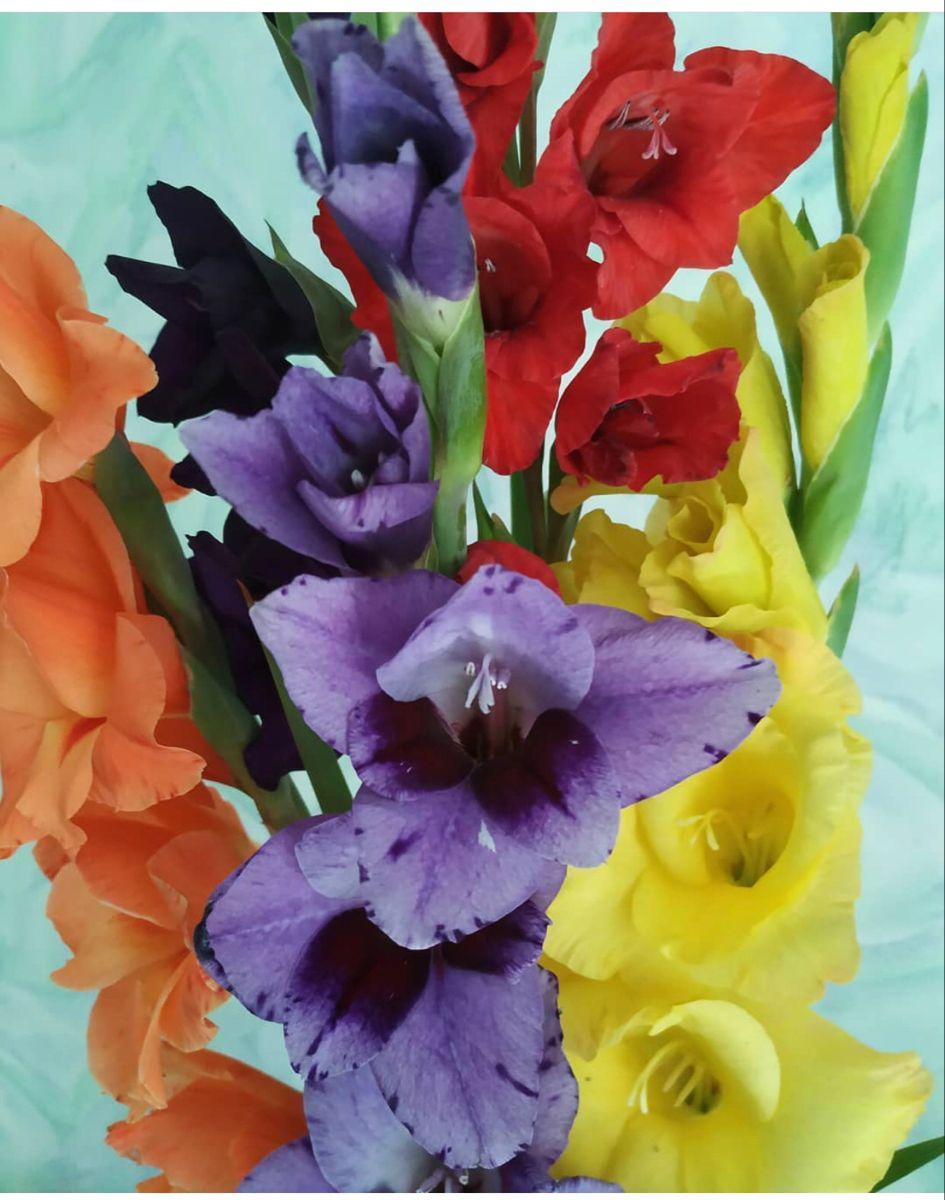 Gladiolus Flower In 2020 Gladiolus Wedding Flowers Flowers Gladiolus Wedding