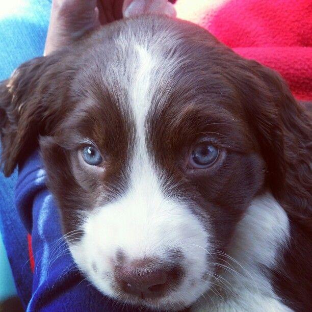 Cool Cute Puppy Blue Eye Adorable Dog - 042643b4ad0e83849e6cc5d3bef2cef9  Gallery_3197  .jpg