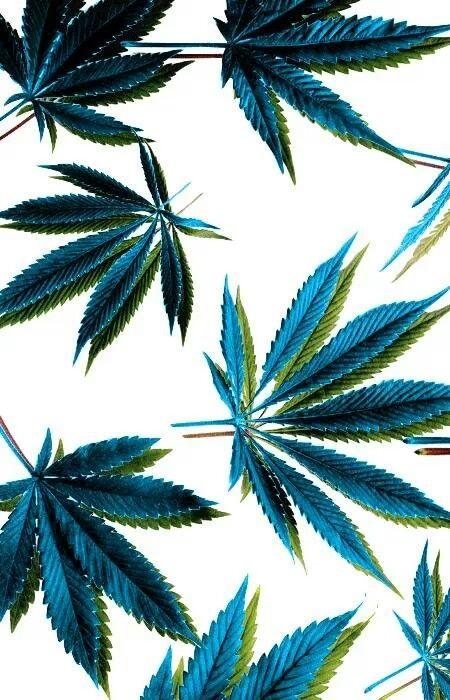 Pin De Diegomv En Myweed Pinterest Marihuana Cannabis Y