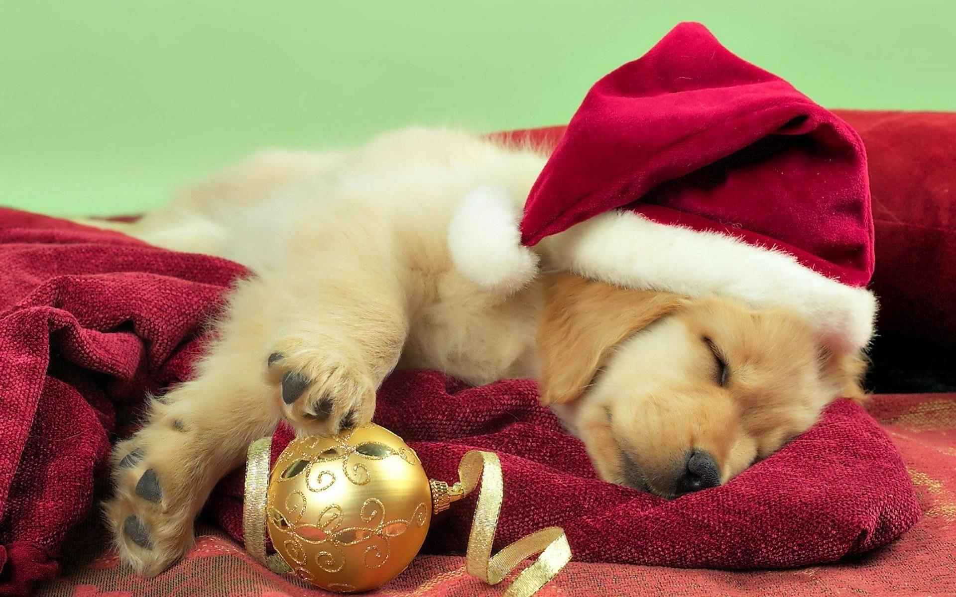 Dog sleeping on christmas christmas time pinterest