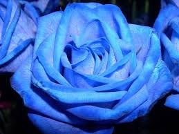 Resultado de imagem para azuis