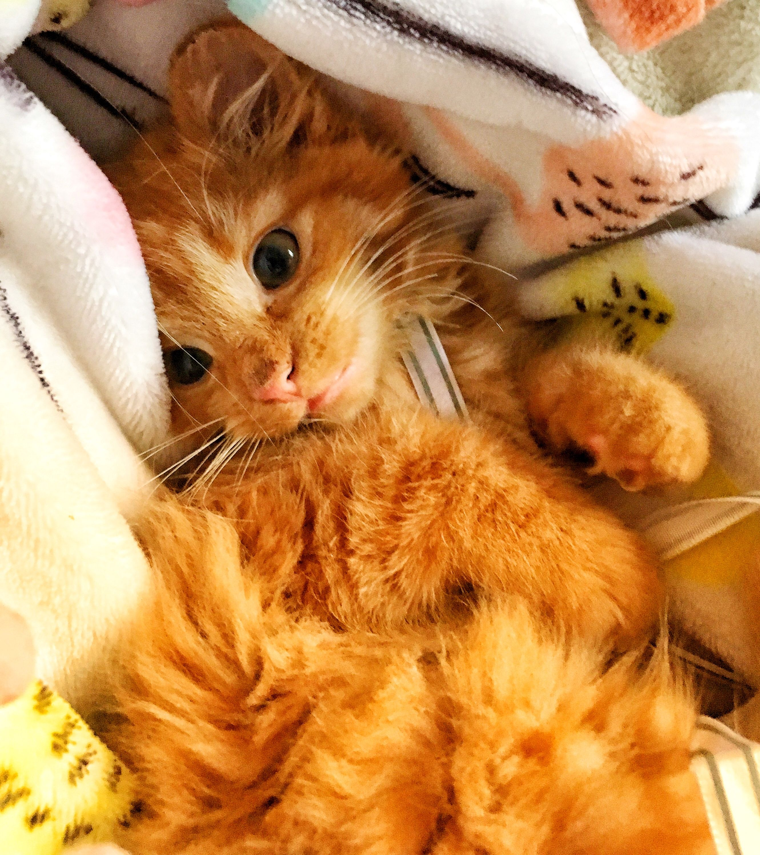My New Rescued Ginger Baby Ziggy Baby Cats Crazy Cats Cute
