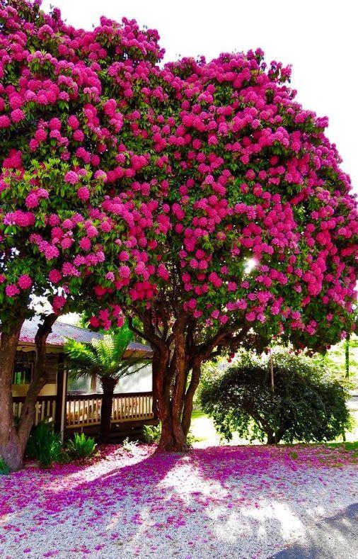 Tipos De Arboles Para Jardin