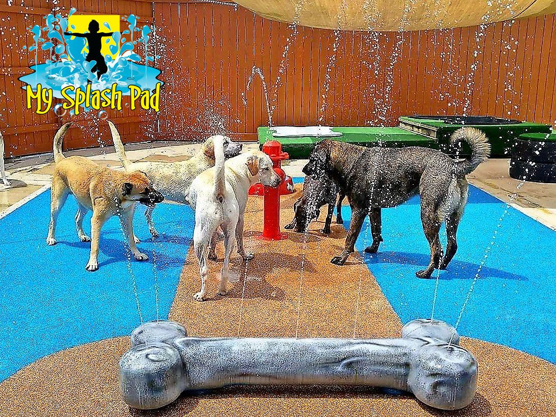 Dog Water Park Features For Your Splash Pad Water Play