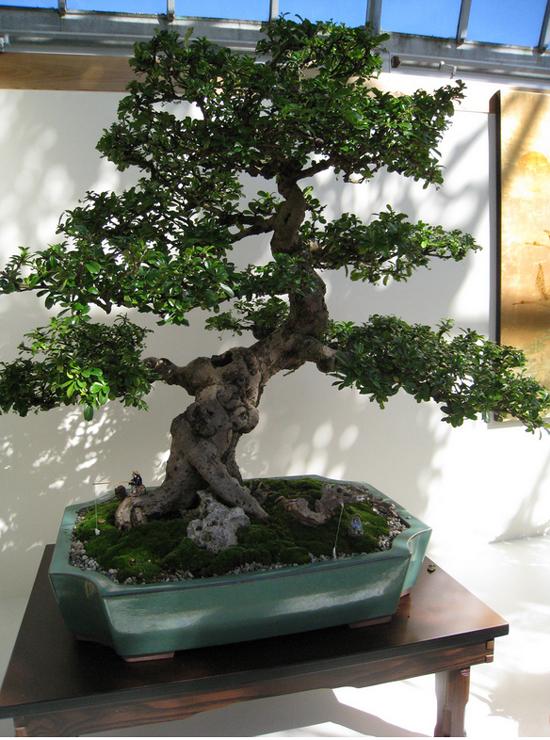 Pin On Gardening Bonsai Trees Ǜ†æ½ Penzai بونساي