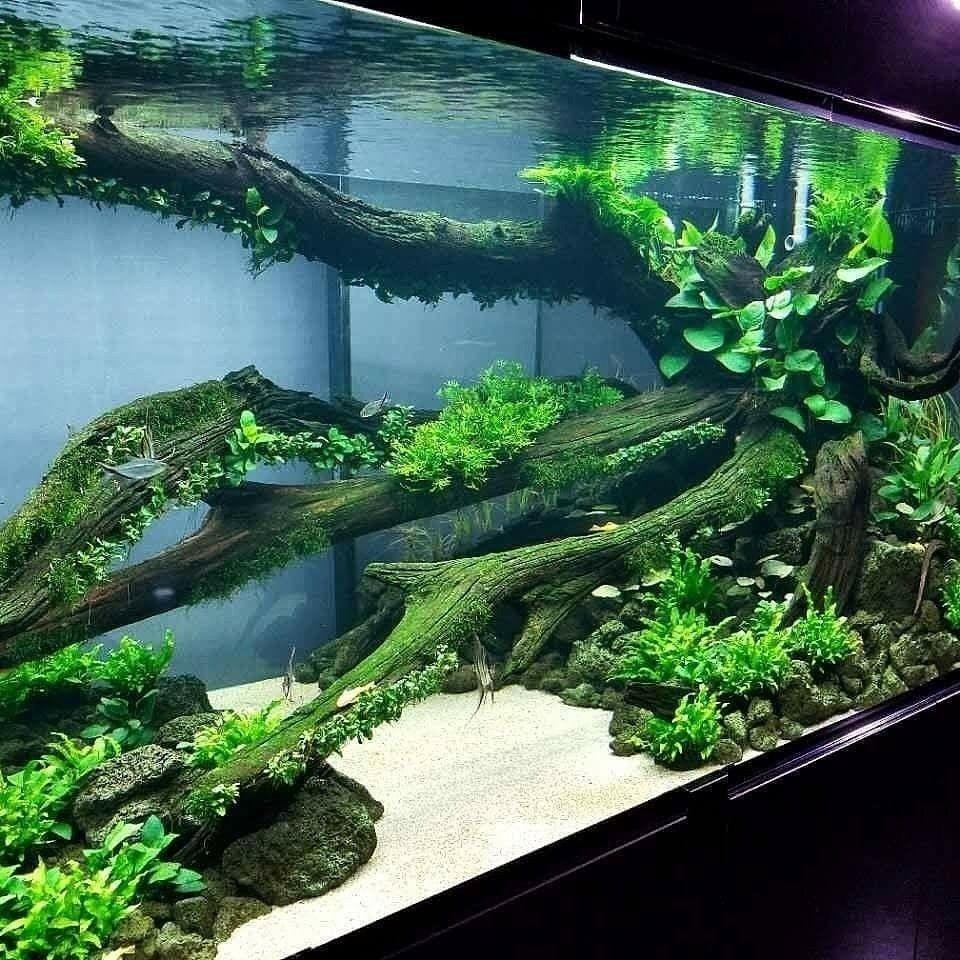 Pin by tanja heinen on aquarium pinterest aquariums fish tanks