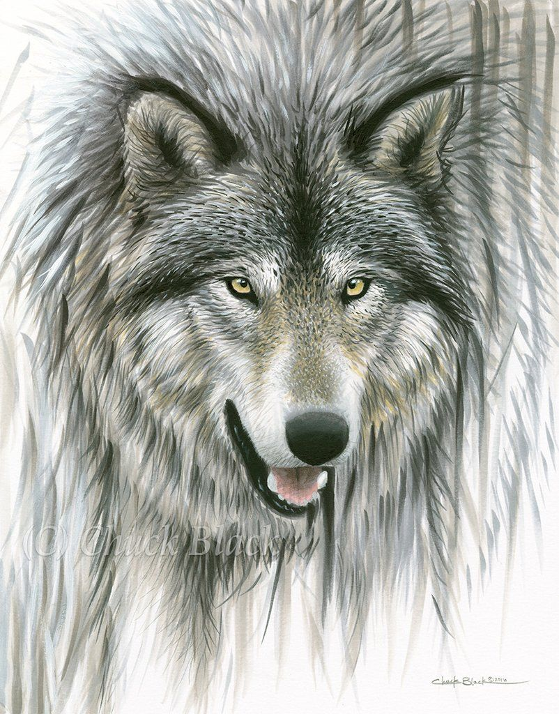 Gray Wolf Limited Edition Print Out Of The Depths Limited