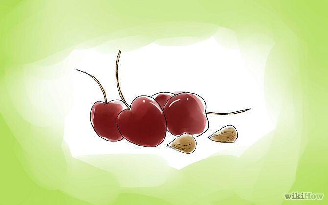 How To Plant Cherry Seeds Cherry Seeds Cherry Tree From Seed Planting Cherry Seeds