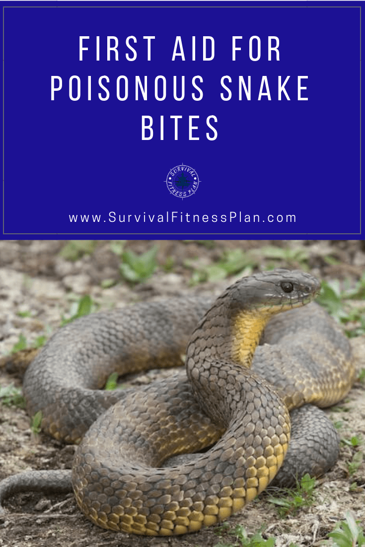 Learn First Aid For Poisonous Snake Bites Poisonous Snakes