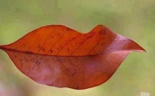 Smile - even the leaves do.