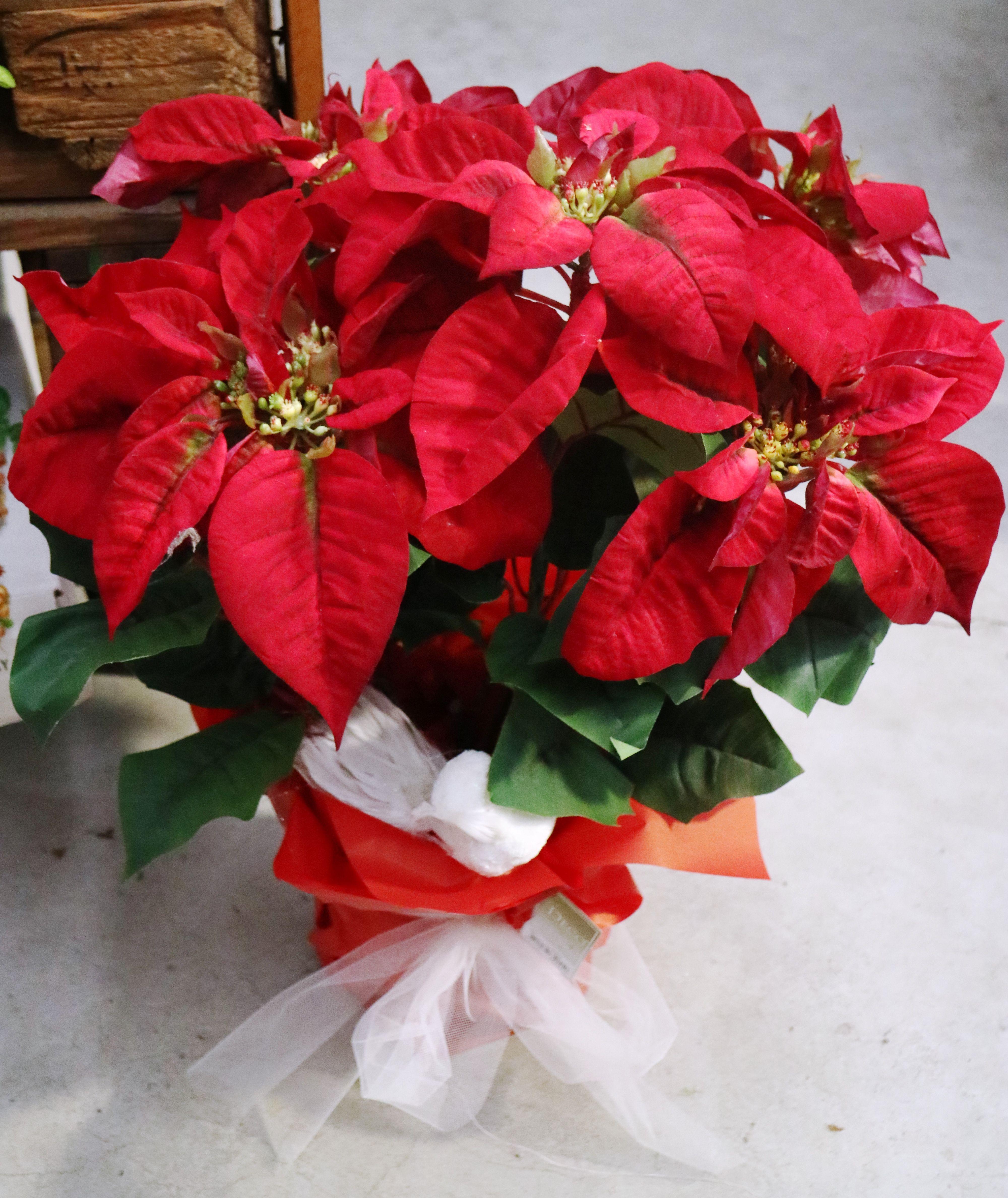 Stella Di Natale Artificiale.Stella Di Natale Artificiale Piante Piante Natale E Stelle