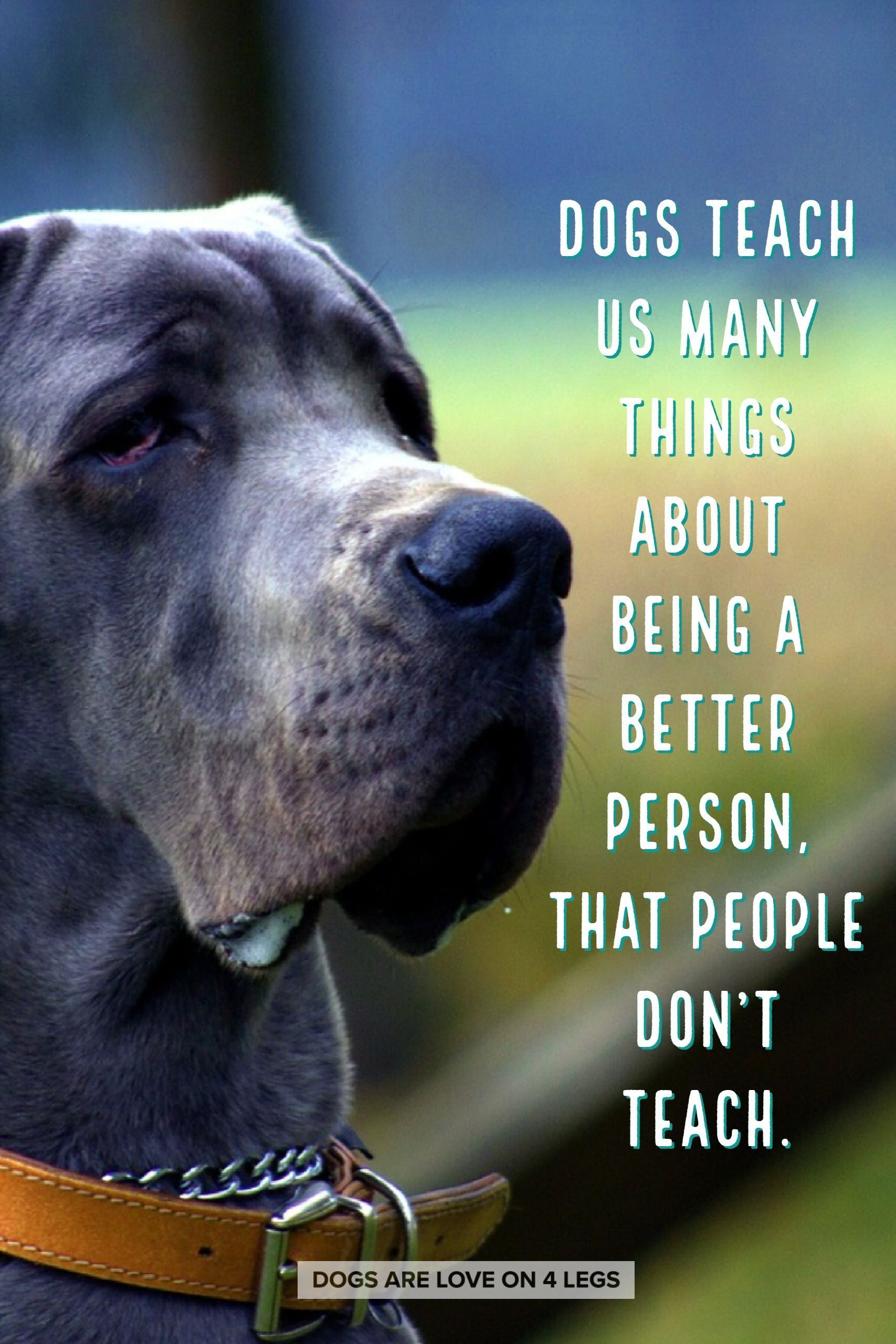 Dog Quote Dogs Teach Us Many Things About Being A Better Person