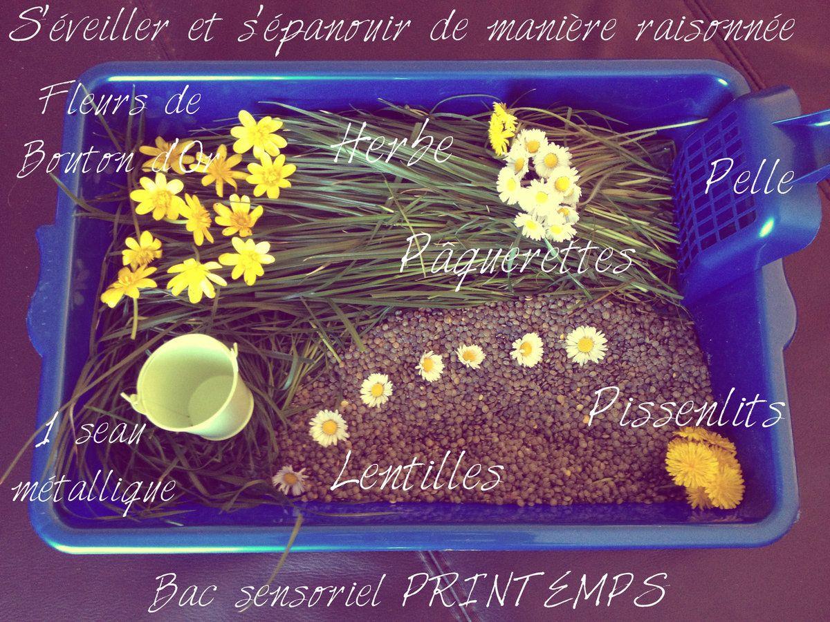 Bac sensoriel : Le printemps (mars 2014)