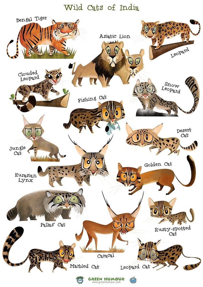 Wild Cat Posters With Images Wild Cats Cat Posters Cat Species