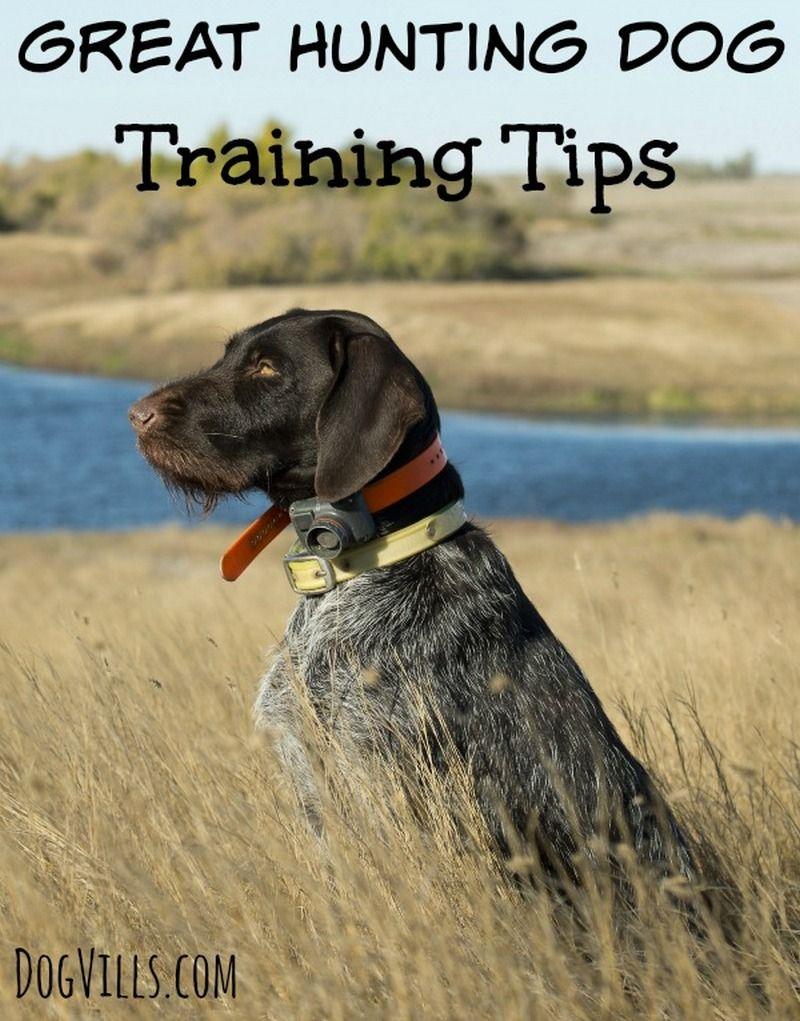 Great Hunting Dog Training Tips Dog training, Training