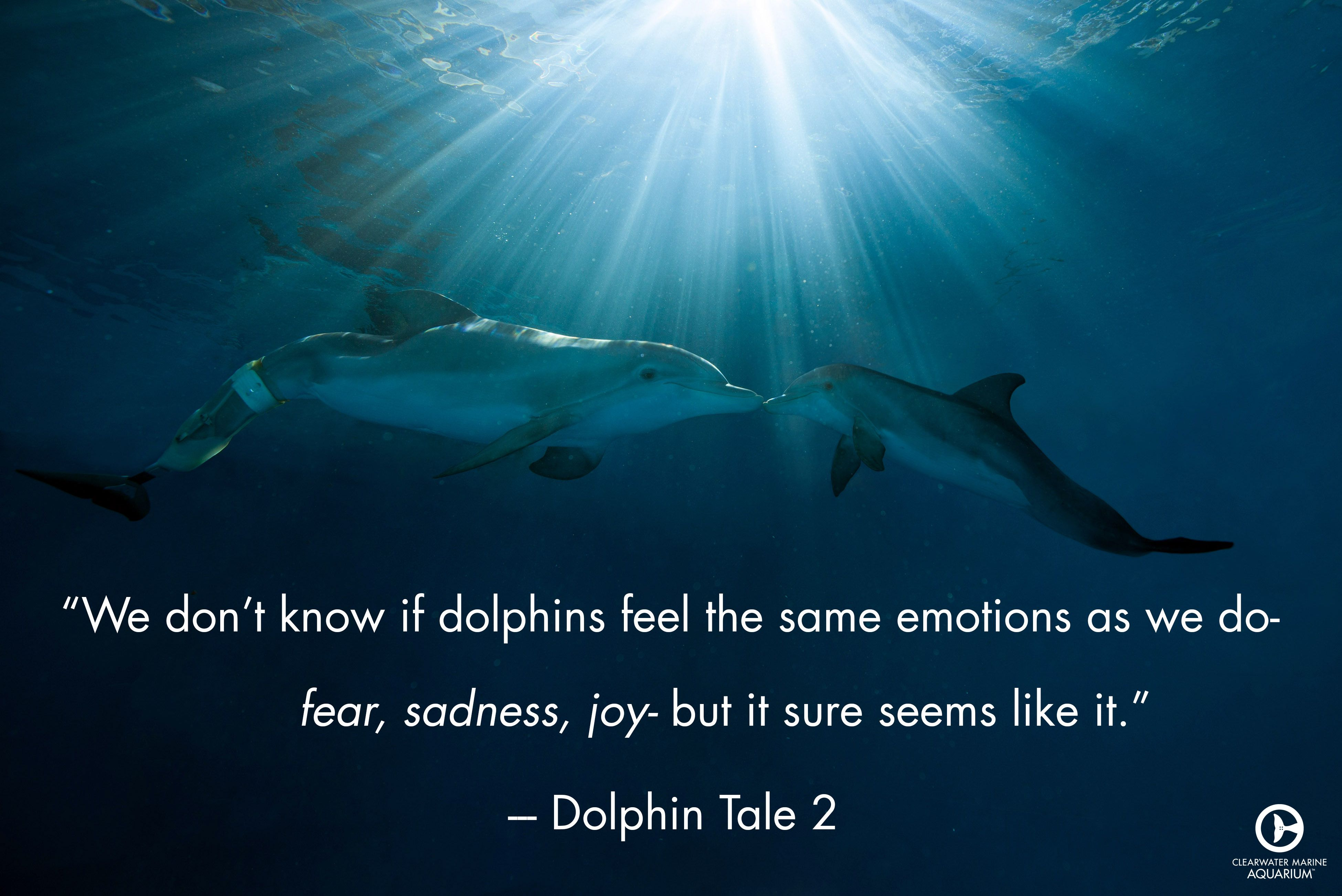 Who remembers this quote from Dolphin Tale 2? What was your favorite