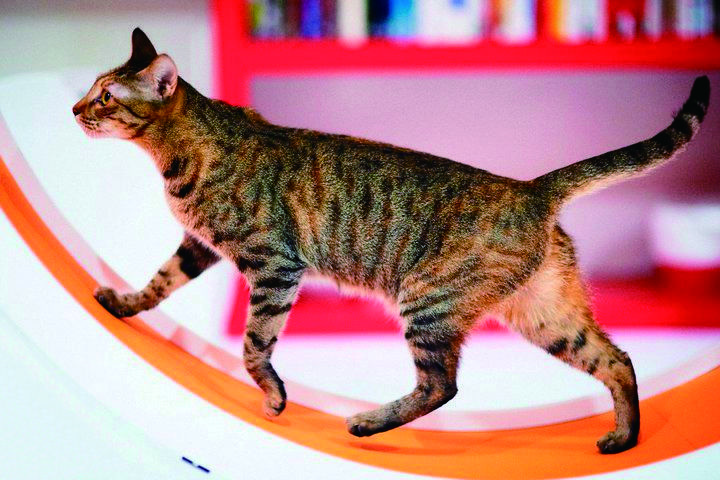 Catswall Innovative Cat Furniture And Supplies Pet Furniture Cat Furniture Modern Pet Furniture