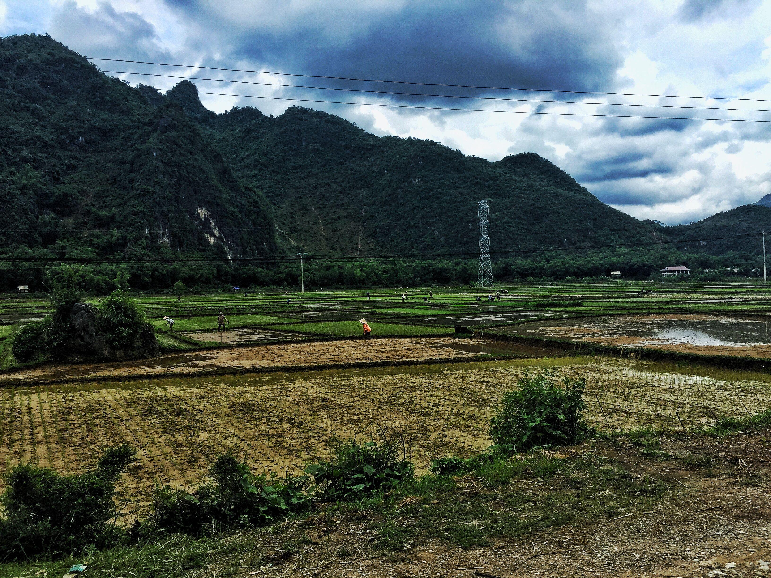 Rice paddies, Pu Luong