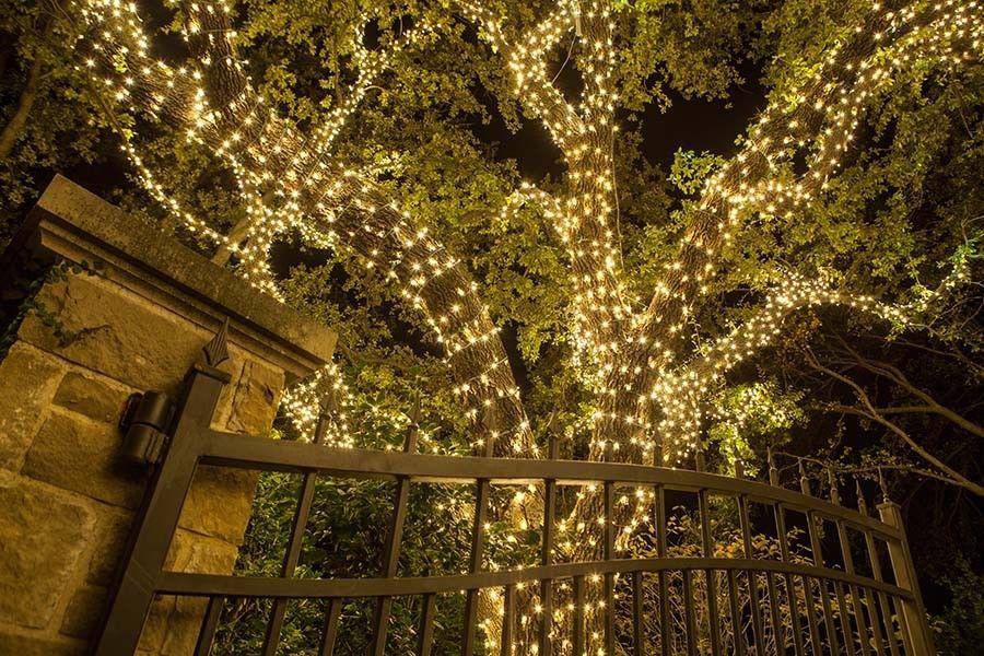 Dallas Landscape Lighting Gallery