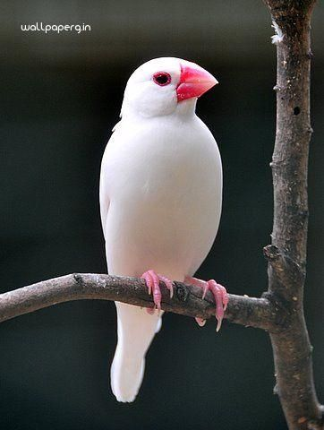 Download White Bird Hd Wallpaper From Animal Hd Wallpapers Hd
