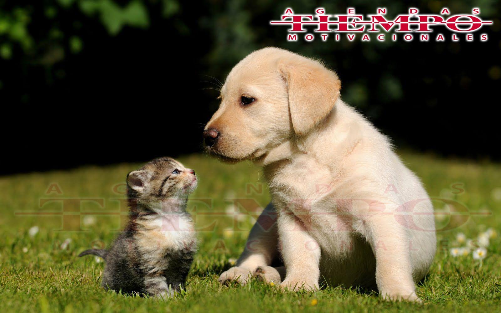 Perro Labrador Mascotas Agua Animales Entre Naufragio Perritos Tiernos Amor Amistad Buenas Noches