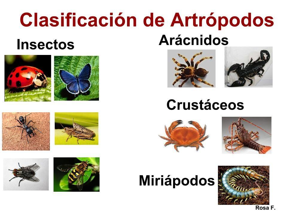 Resultado De Imagen Para Dibujo De Los Artropodos Y Sus Partes
