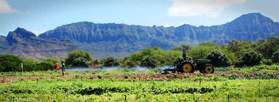 Maʻo Organic Farms Organic Farming Sustainable Agriculture