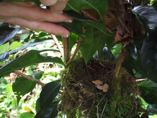 bird friendly coffee on our farm!