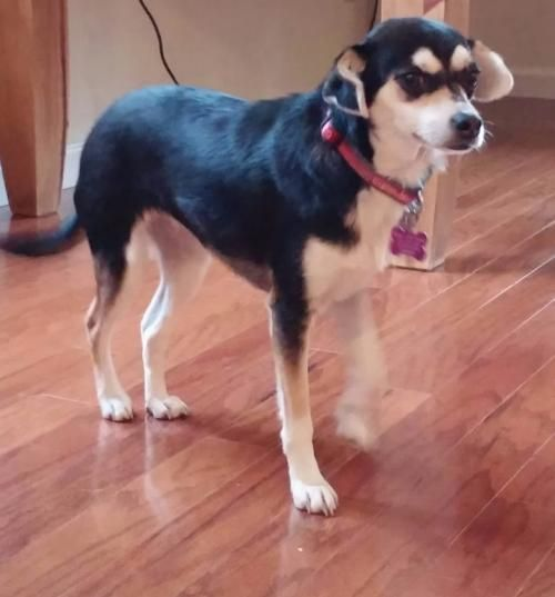 Meet Jessie A Terrier Mix Adult An Adoptable Terrier Looking For