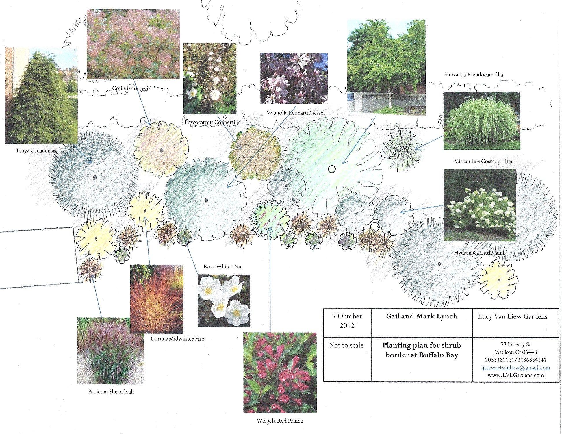 design for shrub border Planting plans Pinterest Shrub