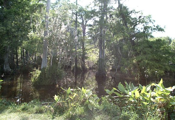 A pond in The Big Cypress National parks usa, National