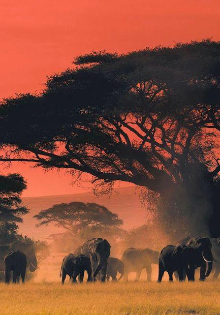 Les 25 meilleures id es de la cat gorie savane africaine - Animaux savane africaine ...