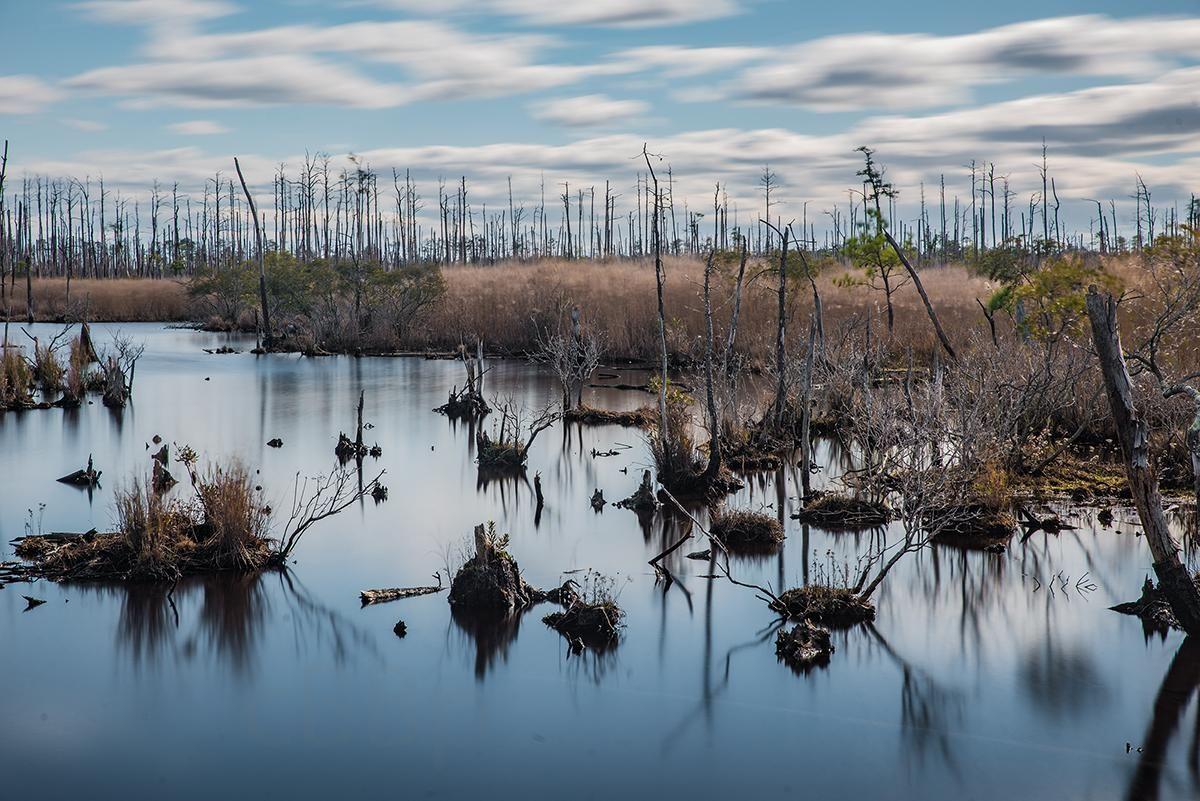 Maryland Marshland 1200 X 801 Reddit Marshland Beautiful Nature Nature Photos