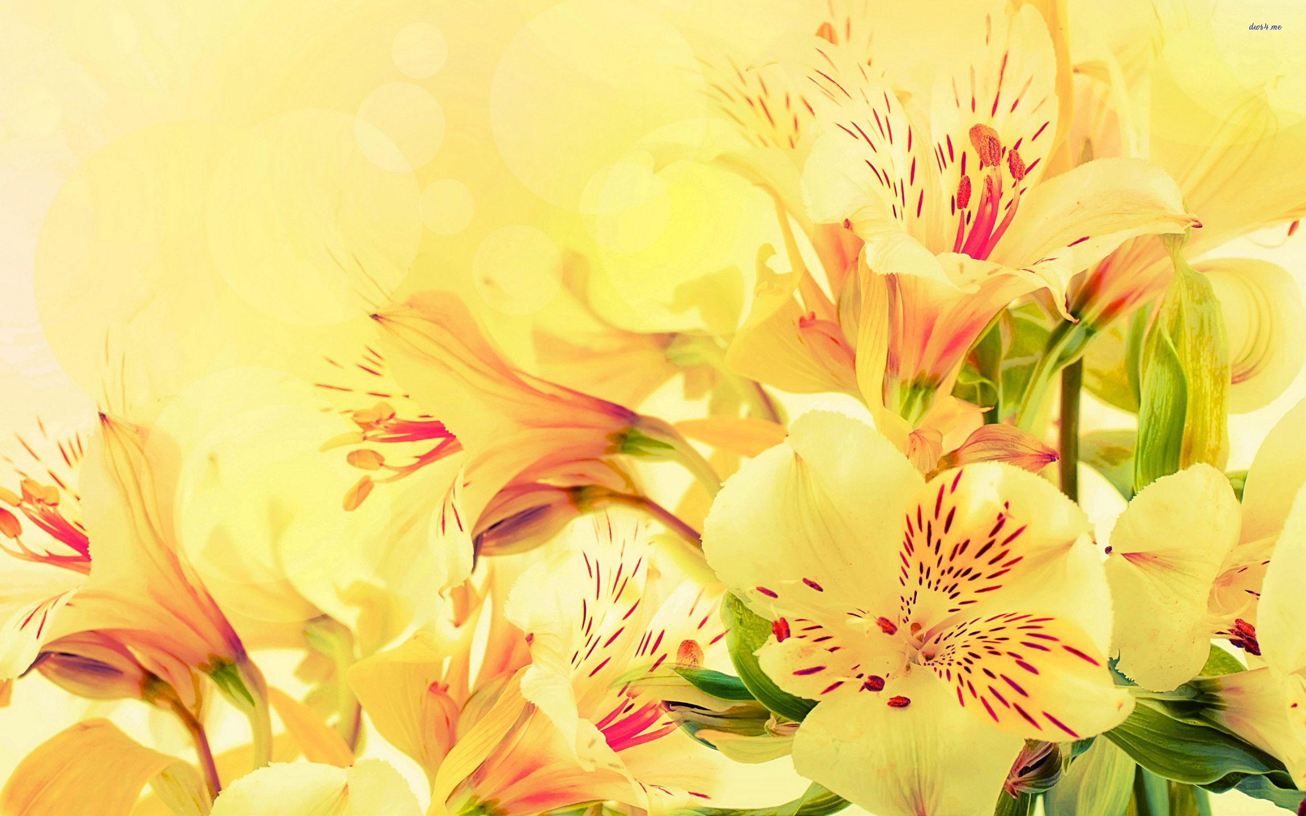Lilies Wallpapers Fine Hdq Lilies Wallpapers Special Hdq Cover Hd