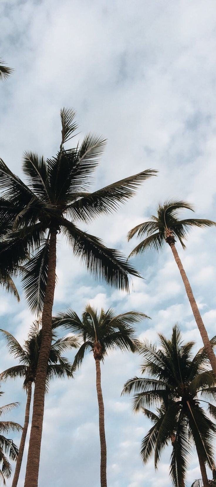 Tumblr Wallpapers Wallpaper Palms Leaves Sky Iphonelockscreen Tumblr Wallpapers Wallpaper P Palm Tree Photography Wallpaper Iphone Summer Iphone Wallpaper