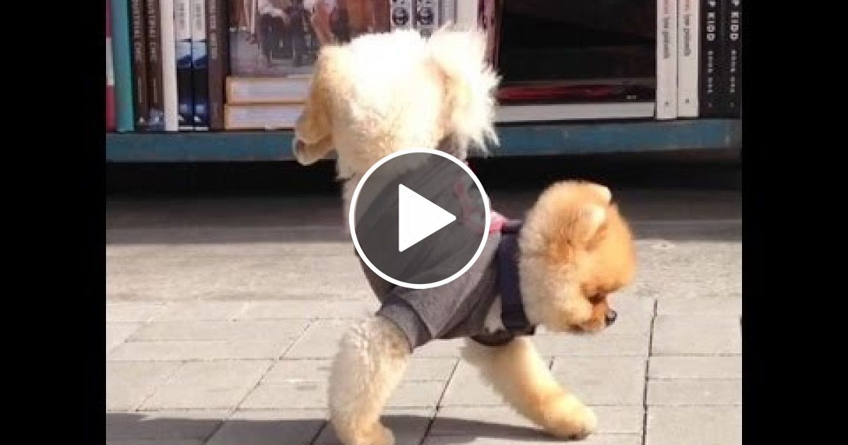 Dogs Dancing Cutest Funniest Puppies And Big Dog Videos